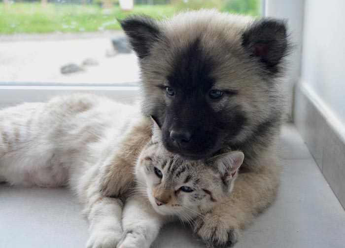 CBD Pets für kleine Tiere